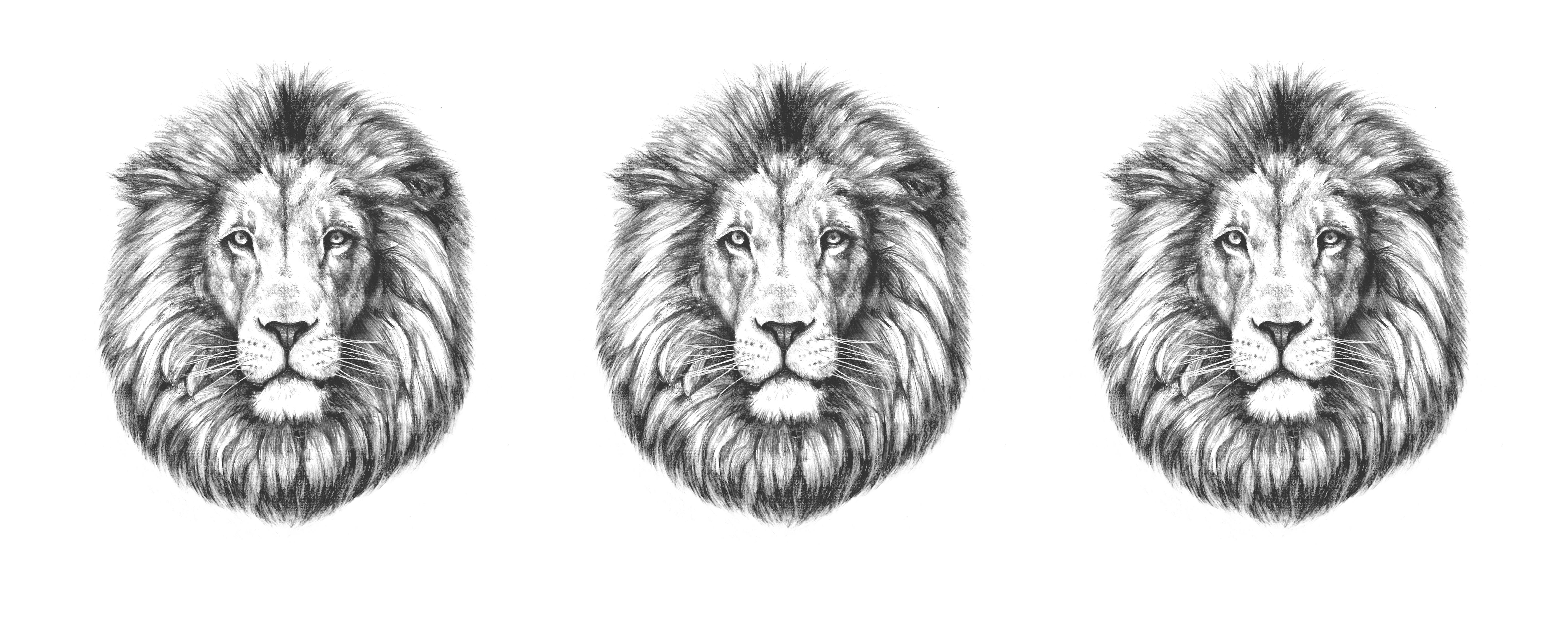 lion_typeA_02_統合_web3_2