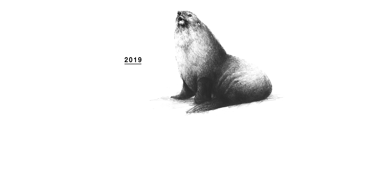 illust_fur seal_04